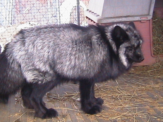 CHEAP EXOTIC ANIMALS FOR SALE