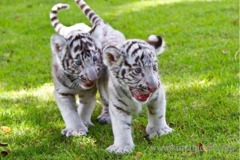 BABY WILD ANIMALS FOR SALE ONLINE AT LOW PRICES
