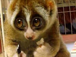 BEST EXOTIC PETS TO OWN