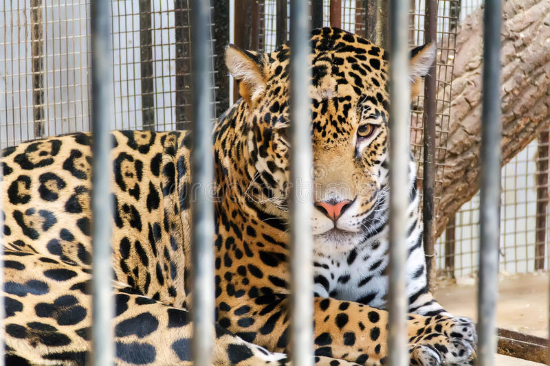 LIVE ANIMALS FOR SALE ONLINE