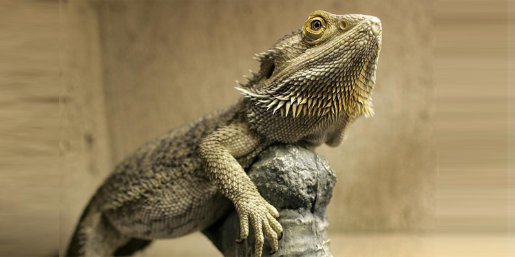 COOL EXOTIC PETS FOR DELIVERY WORLDWIDE