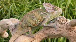 REPTILE PET PRICES